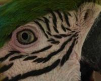 african-bird