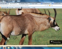 african-deer