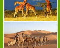 Some Amazing African Animals