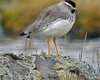 ethiopias-bird-w800-h533
