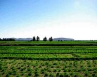 agriculture-area-in-khartoum-sudan
