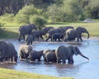 HWANGE NATIONLA PARK, ZIMBABWE